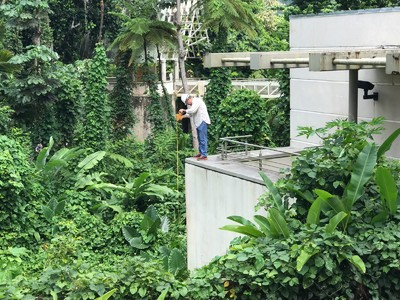 The Revitalization of El Yunque National Rainforest